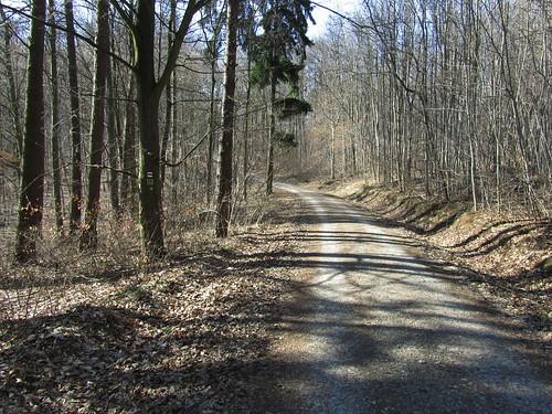 20110321 0208 441 Jakobus Wald Weg