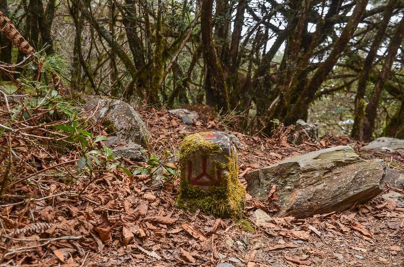 戒茂斯山山字森林三角點(Elev. 2504 m) 1