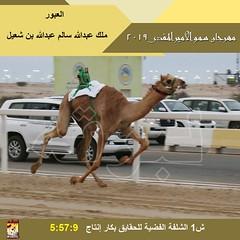 صور منافسات سباق الحقايق (الأشواط العامة) مهرجان سمو الأمير المفدى صباح 30- 3-2019