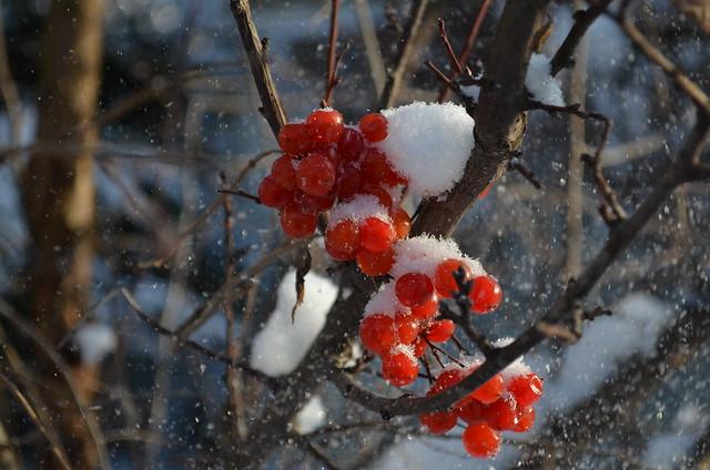 Снежинкою не просто быть: Она с небес к нам прилетает, Чтоб таять, таять и любить, Любить и снова таять, таять..., Nikon D5100, AF-S DX VR Zoom-Nikkor 18-55mm f/3.5-5.6G