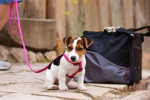 受けるべき予防接種をきちんと受けてる犬