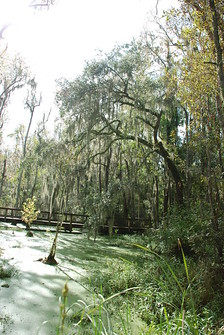 Bridge near pond at Magnolia Plantation. From History Comes Alive in Charleston