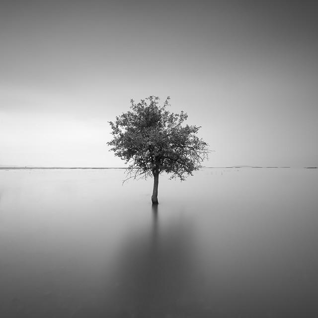 Alone VII