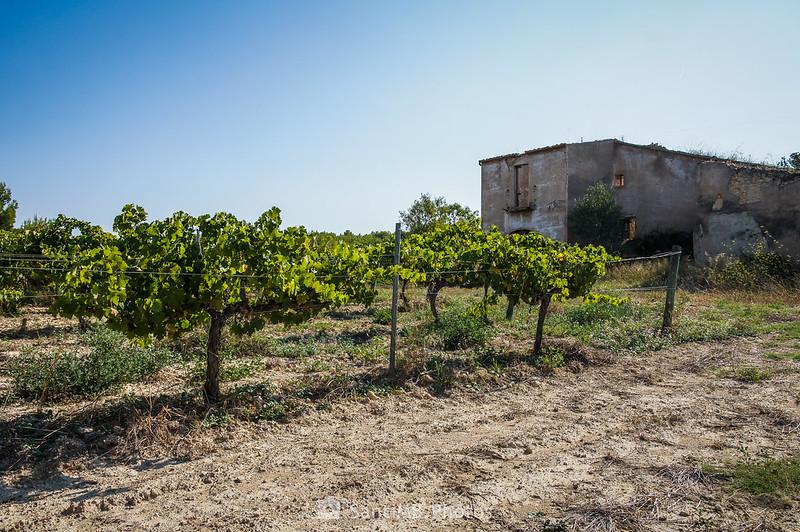 La Torreta de La Ràpita y su viñedo