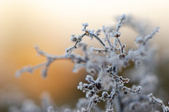 Winterwärme