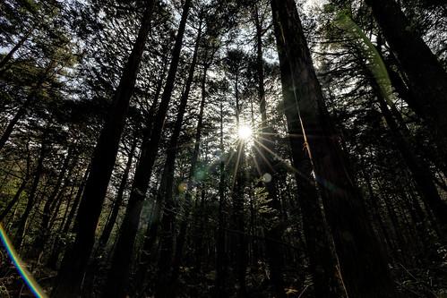Nature, Sunlight, Warmth