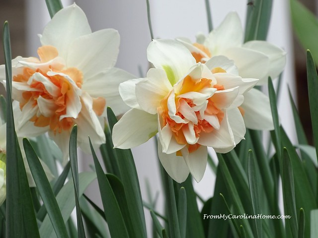 March in the Garden at FromMyCarolinaHome.com