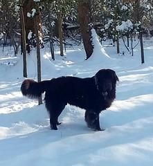 Otis loving the snow