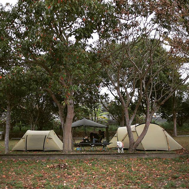 20190208 不露 會blue 久違了 露營 #歐北露 #campingwithdogs #ilovecamping #campinglife #又到我家另一個後院了