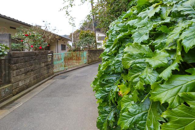 鎌倉の戸建物件