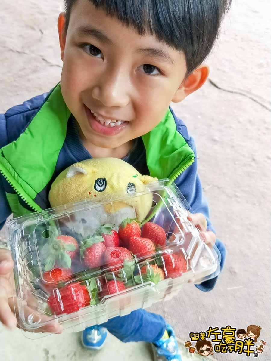 大岡山觀光草莓園-2
