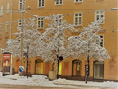 snow in yellow