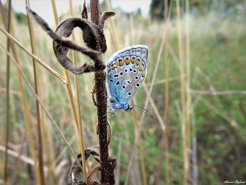 Butterfly 1766