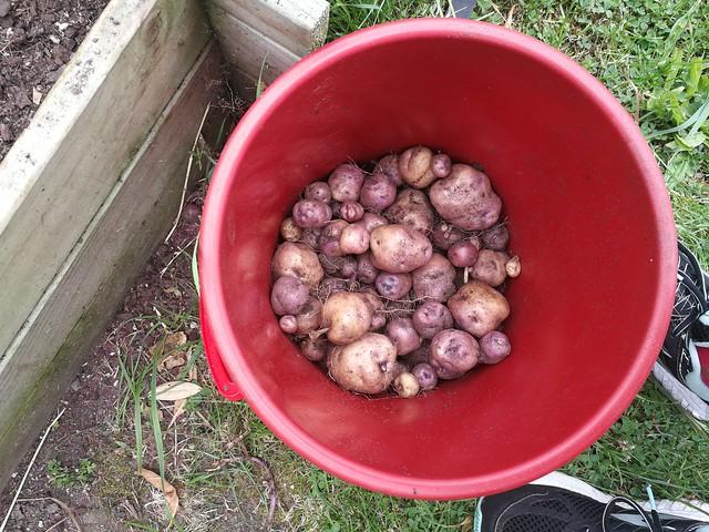 Whataroa harvest