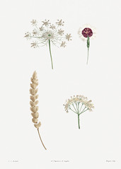 Vintage mixed flowers drawing