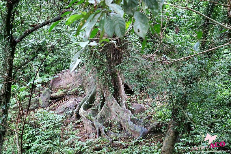 延伸島嶼生命綠 花蓮護樹IMG_5268