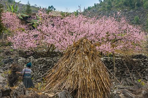 _J5K8116.0312.Lũng Phìn.Đồng Văn.Hà Giang