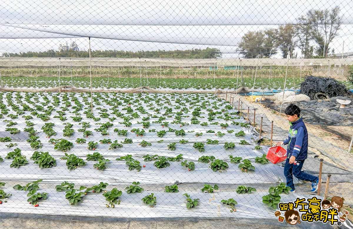 大岡山觀光草莓園-15