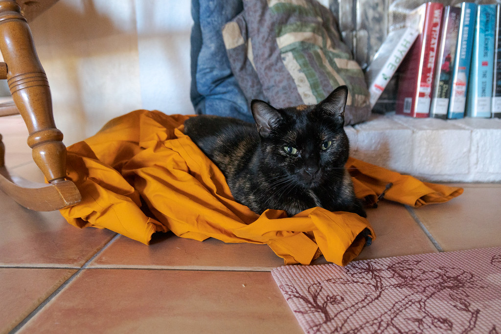 Our tortoiseshell cat Trixie sits on my orange rain jacket on the tile floor