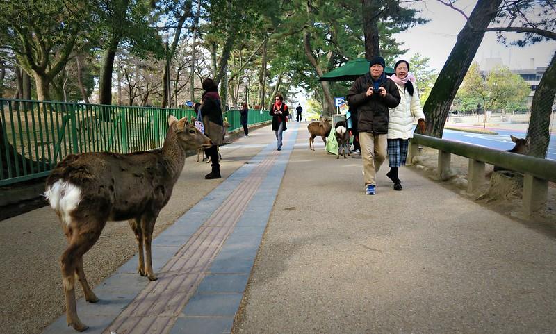 Roteiro Nara