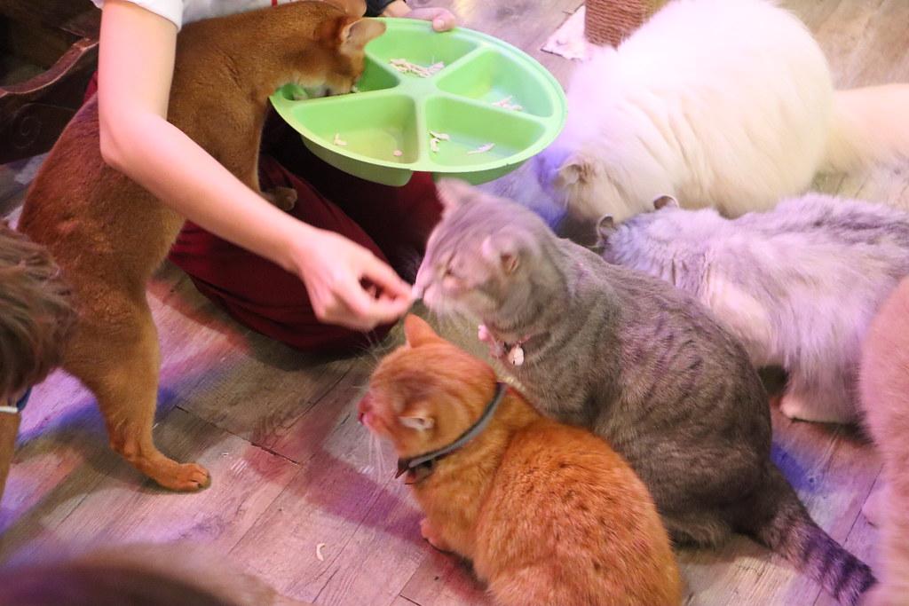 Caturday cat cafe (36)