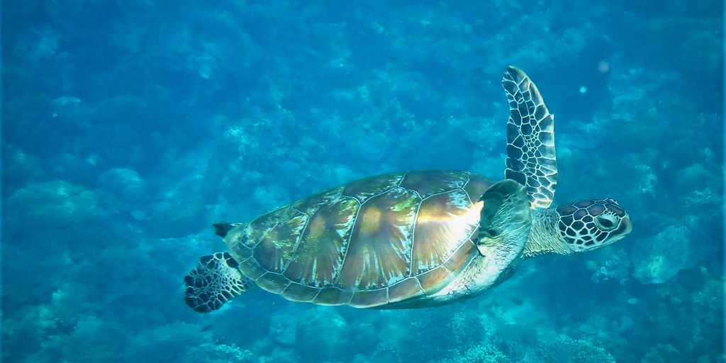 le-carbone-océanique-refaire-surface