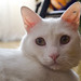 Uno de los gatos de mi pareja