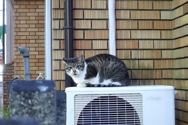 Today's Cat@2019-01-28」