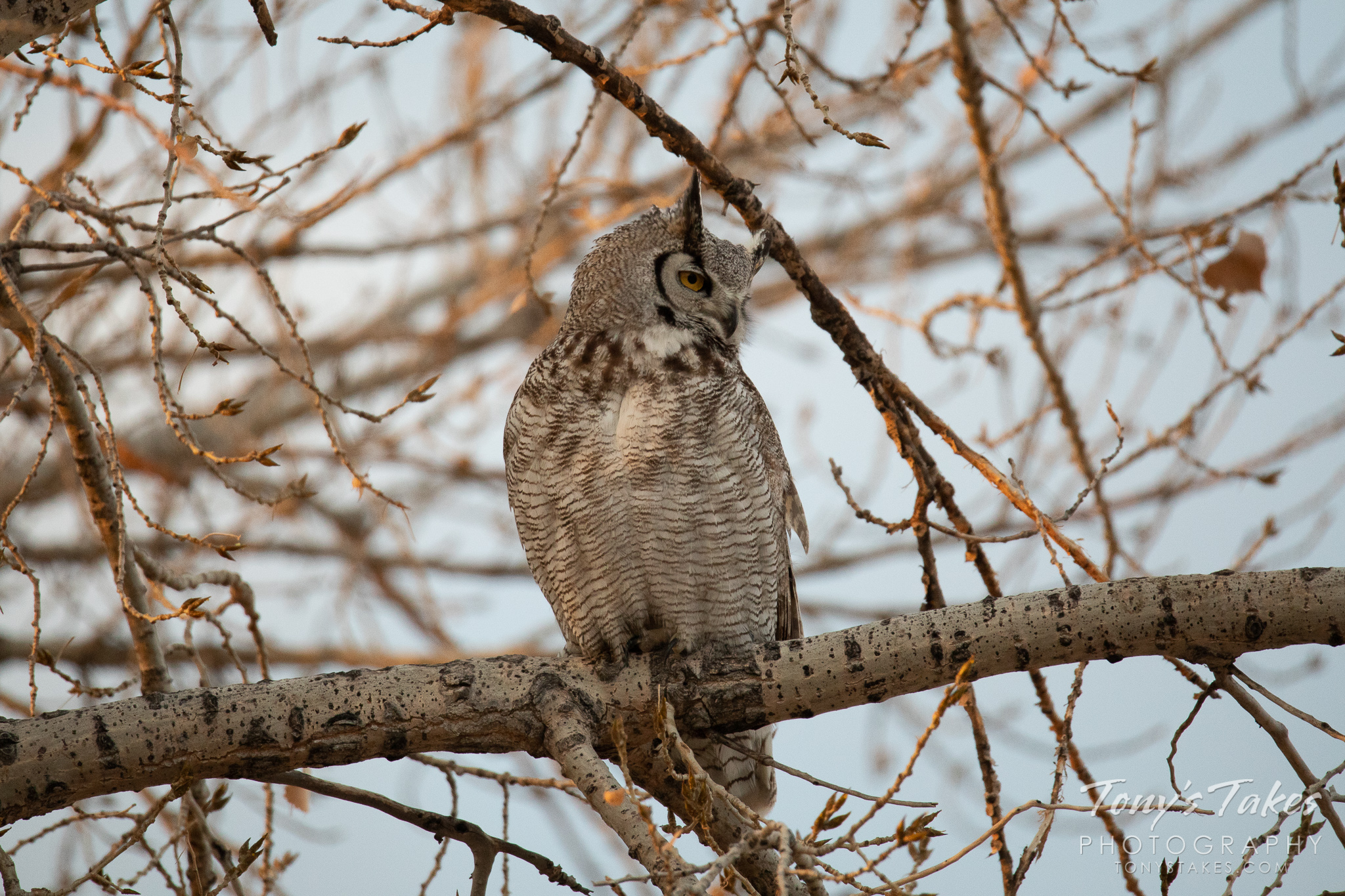A great horned owl keeps watch at Jackson Lake State Park in Colorado. (© Tony's Takes)