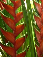 Czerwono i zielono | Red & green