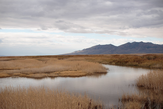 Bear River Bird Migratory Refuge