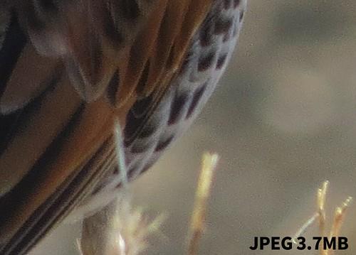 JPEG画像