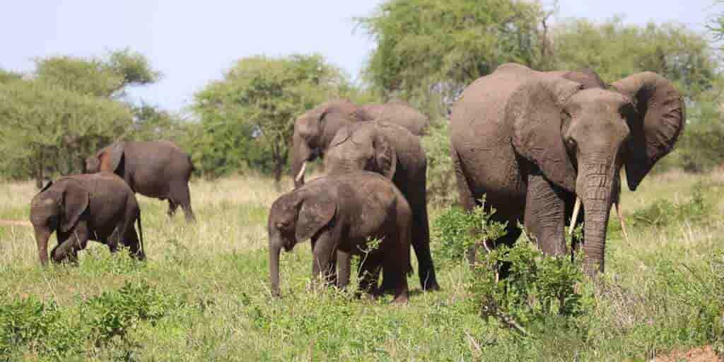 éléphant-asie-habitats
