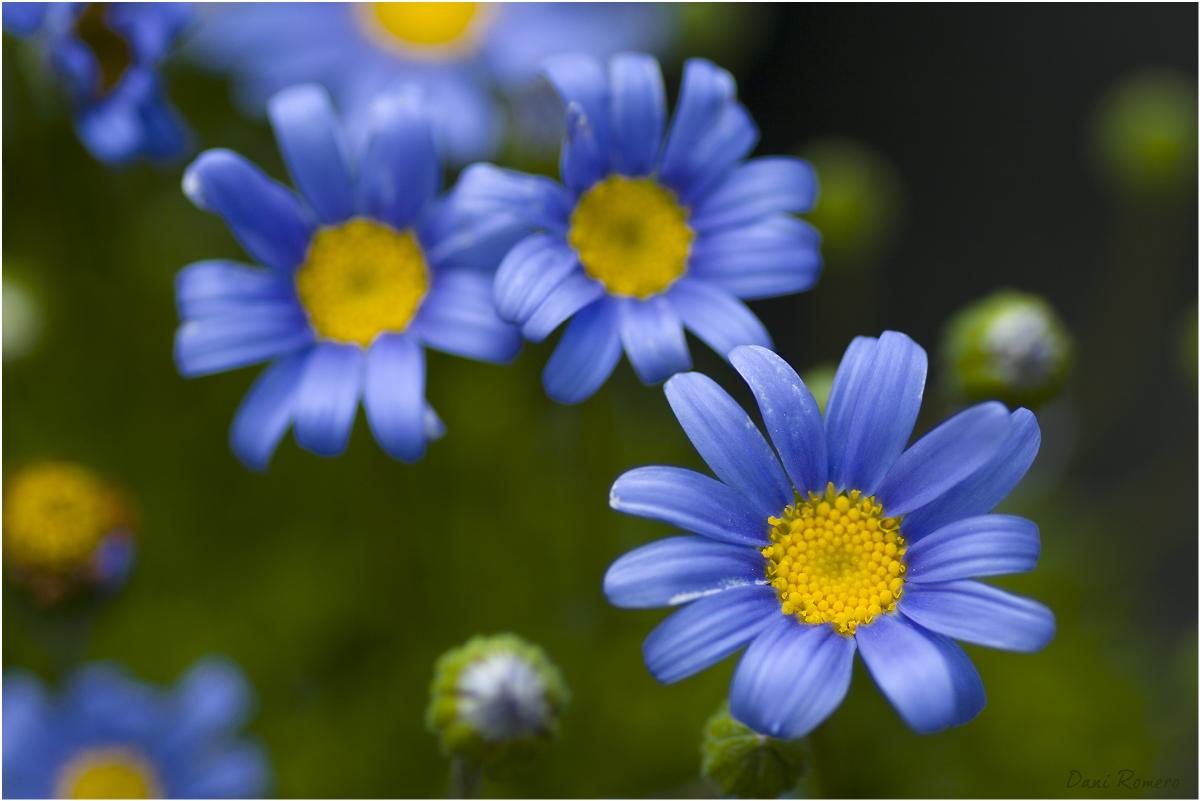 140.flor
