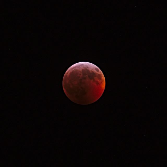 Super Blood Wolf Moon, Panasonic DMC-GX8, M.40-150mm F2.8 + MC-14