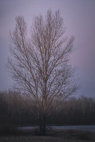Not the last tree I'll shoot