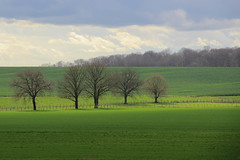 Bientôt le printemps en Bourgogne - soon spring in Burgundy - Photo of Longchamp