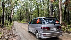 Beta - gravel road forest