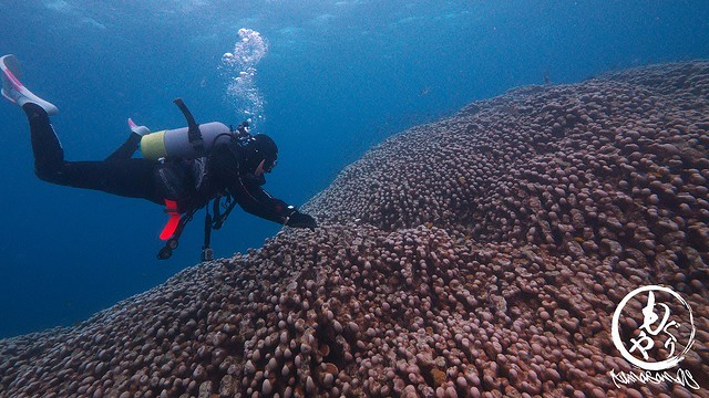 Biggest corals in the world