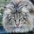 chatnorvegien's buddy icon