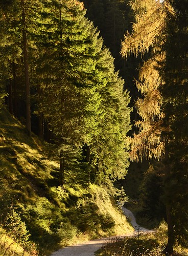 Rosengartengebiet, Catinaccio - Wanderung durch das Tschamintal; Südtirol, Italien (607)