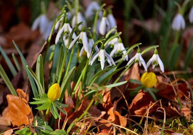 Spring_02056