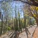 Jardín Botánico de Cactáceasde Teotihuacan por gcarmilla