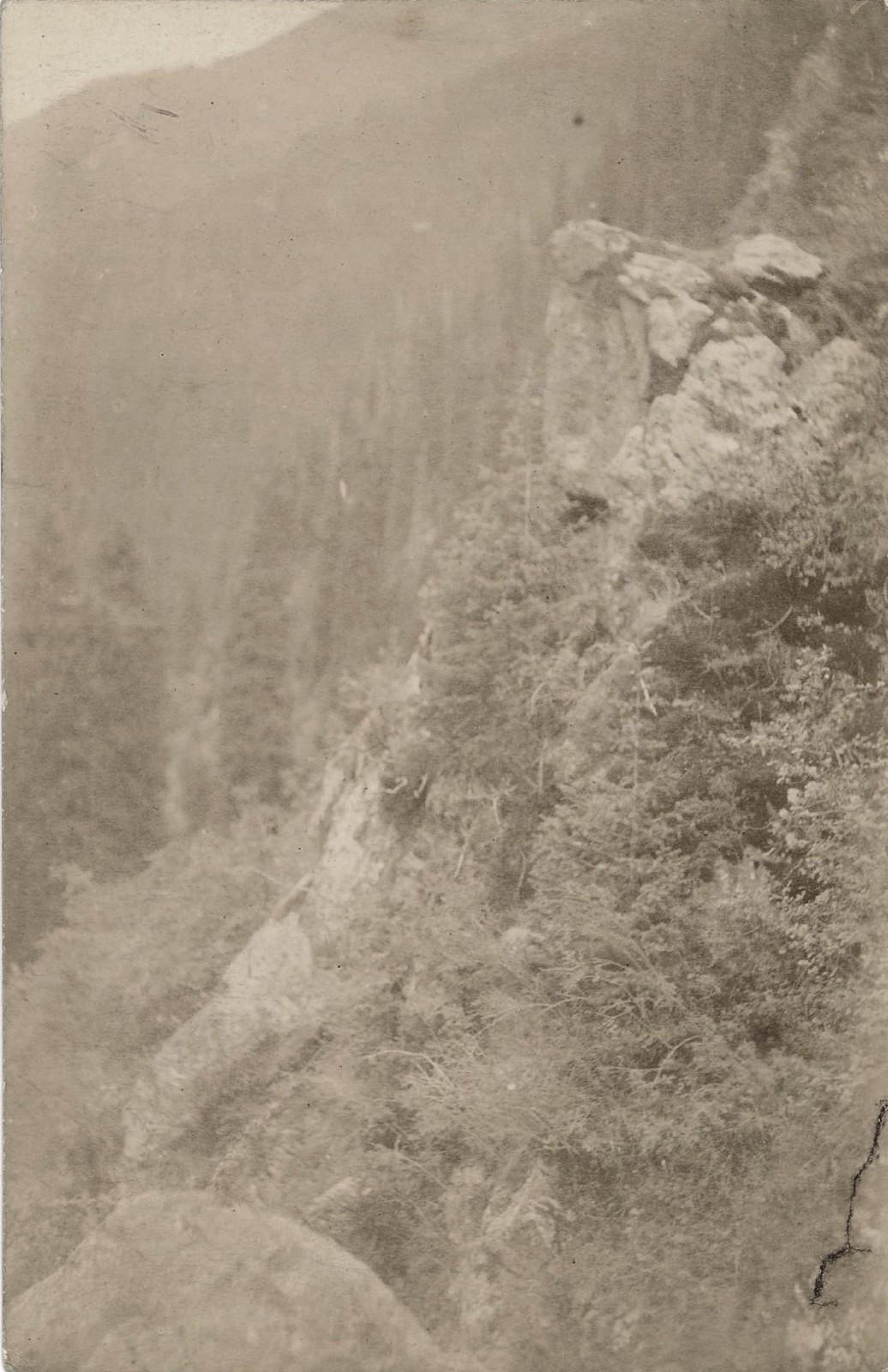 20. Ельник в Терскейских горах