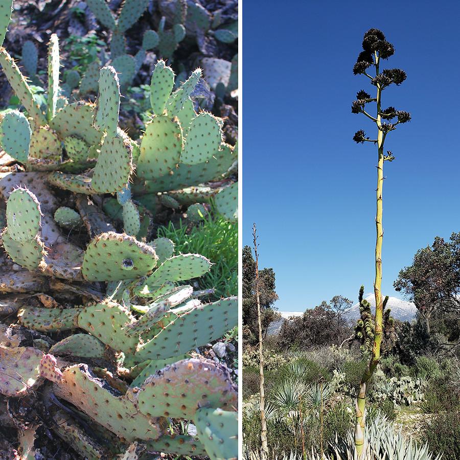 Rancho-Santa-Ana-Botanical-Gardens-Walk-8