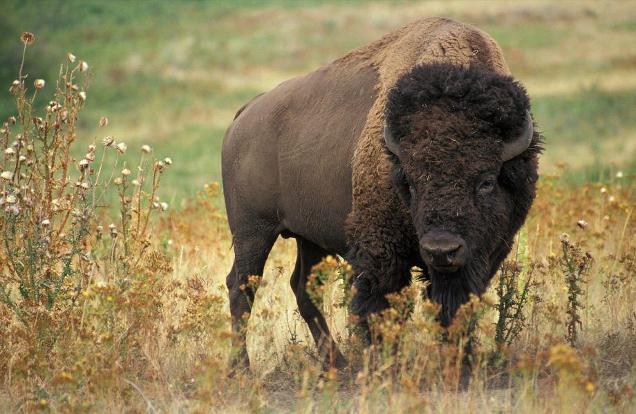 Manitoba wildlife encounters