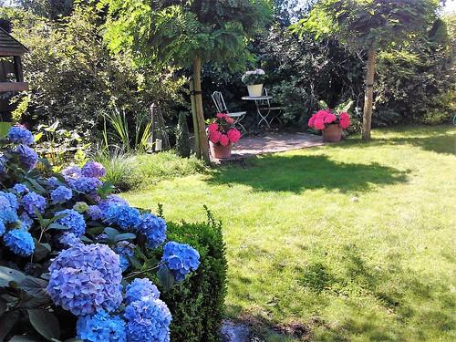 Colours in the garden