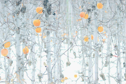 winter-orchard