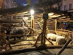 Esel und Schafe in Krippe