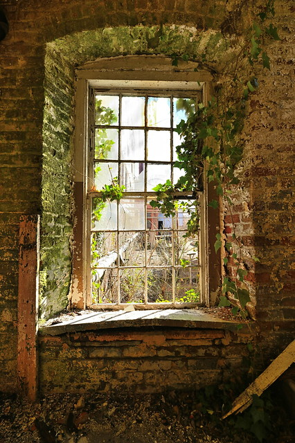 Overgrown window